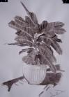 Croton tussal